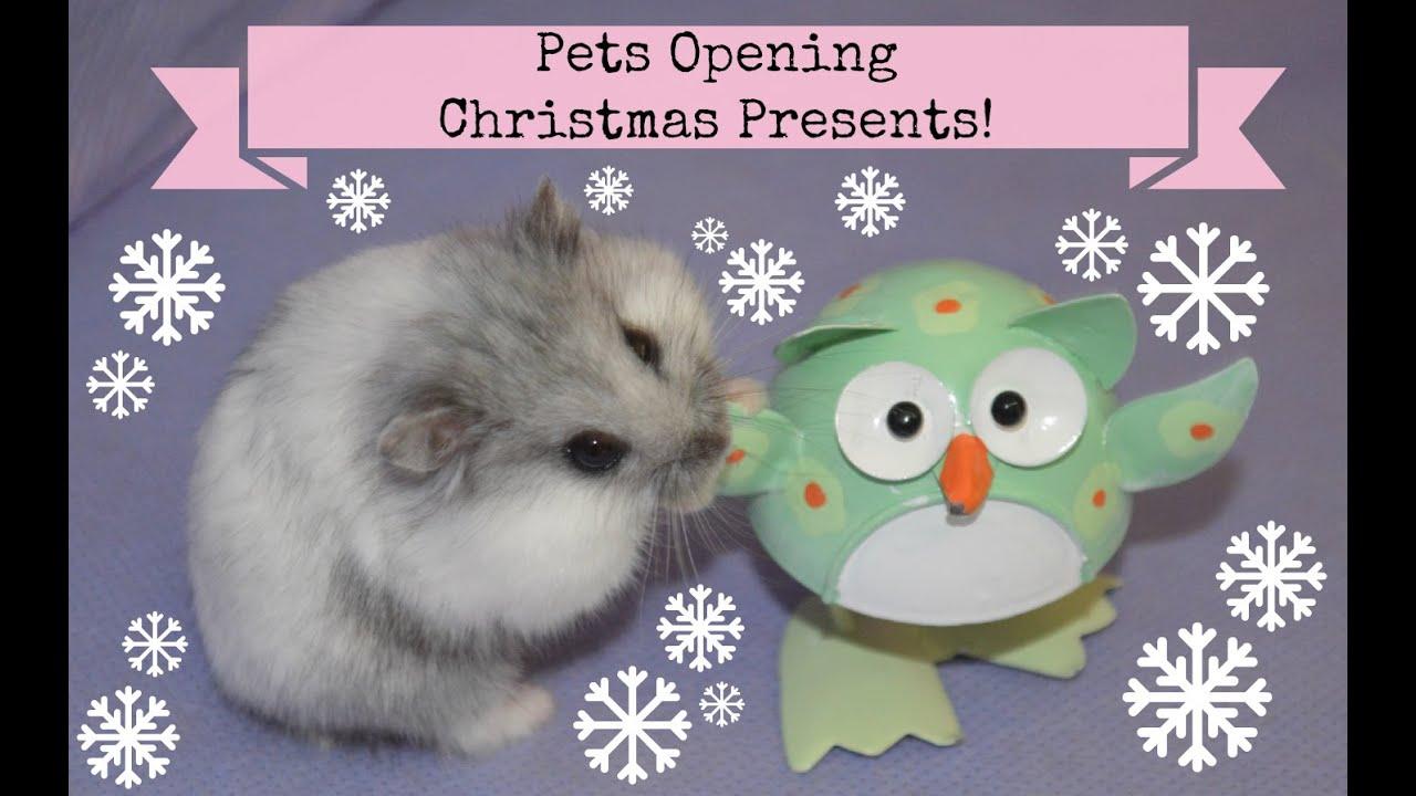 hamster christmas presents
