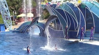 Dolphin Days at SeaWorld San Diego 9-24-15