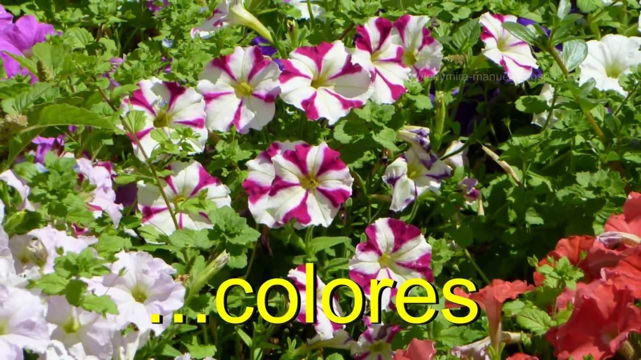 Petunias plantas youtube - Plantas para estanques de jardin ...