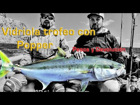 Personal Record Yellowtail Kingfish, On Big Popper, Pesca en