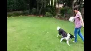 Disc Dog Training In Johannesburg South Africa