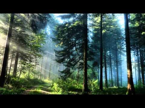 "Pianoduo Cocchia & Fujiwara - A.DVORAK: From The Bohemian Forest, Op.68 Nr.5 ""Silent Woods"""