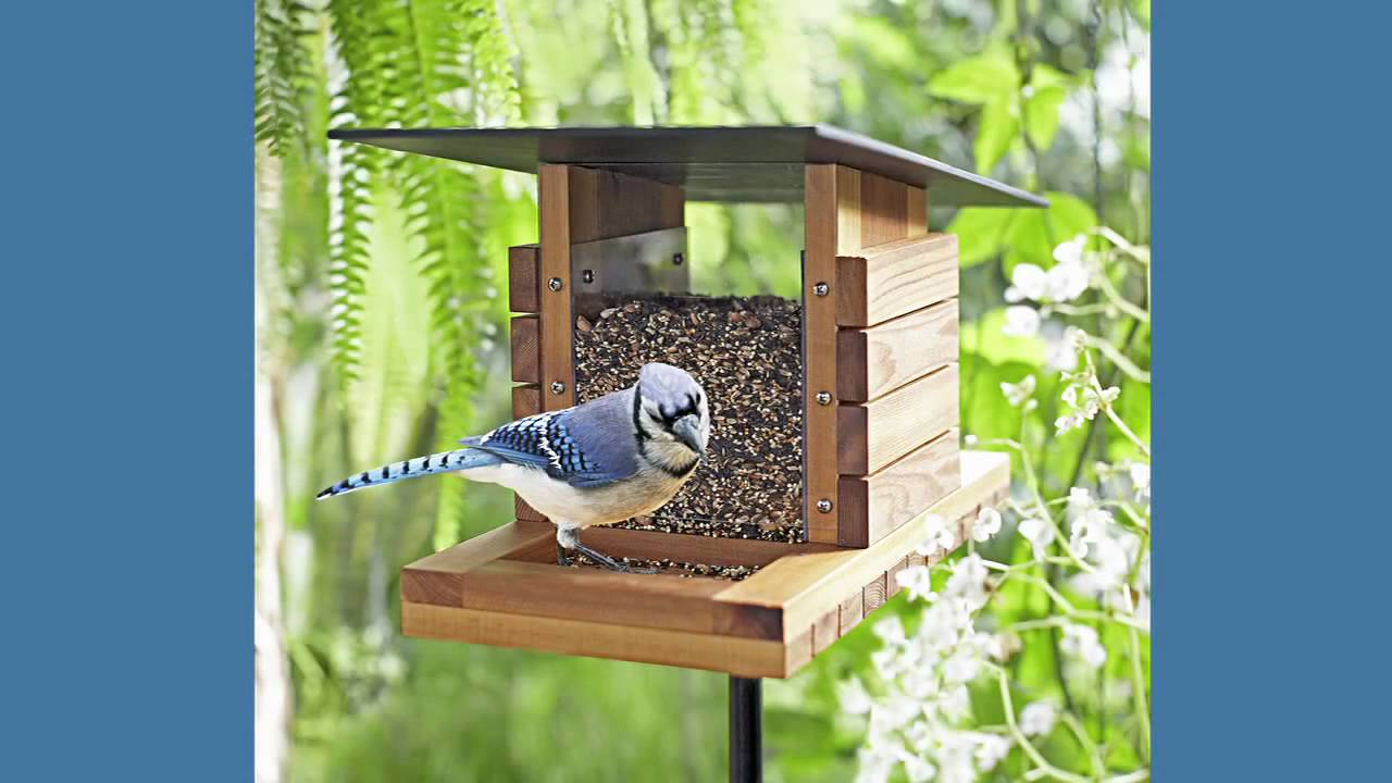Bird Feeder Plans and Step-by-Step Instructions - YouTube