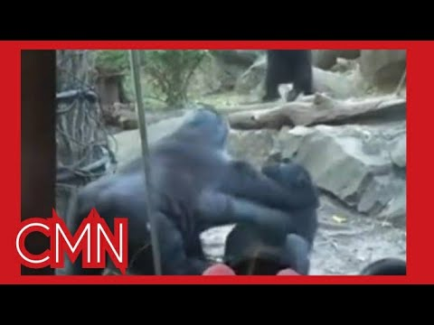 Gorilla has oral sex at Bronx Zoo and humans are scared!