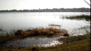 Ocoee Fl lake