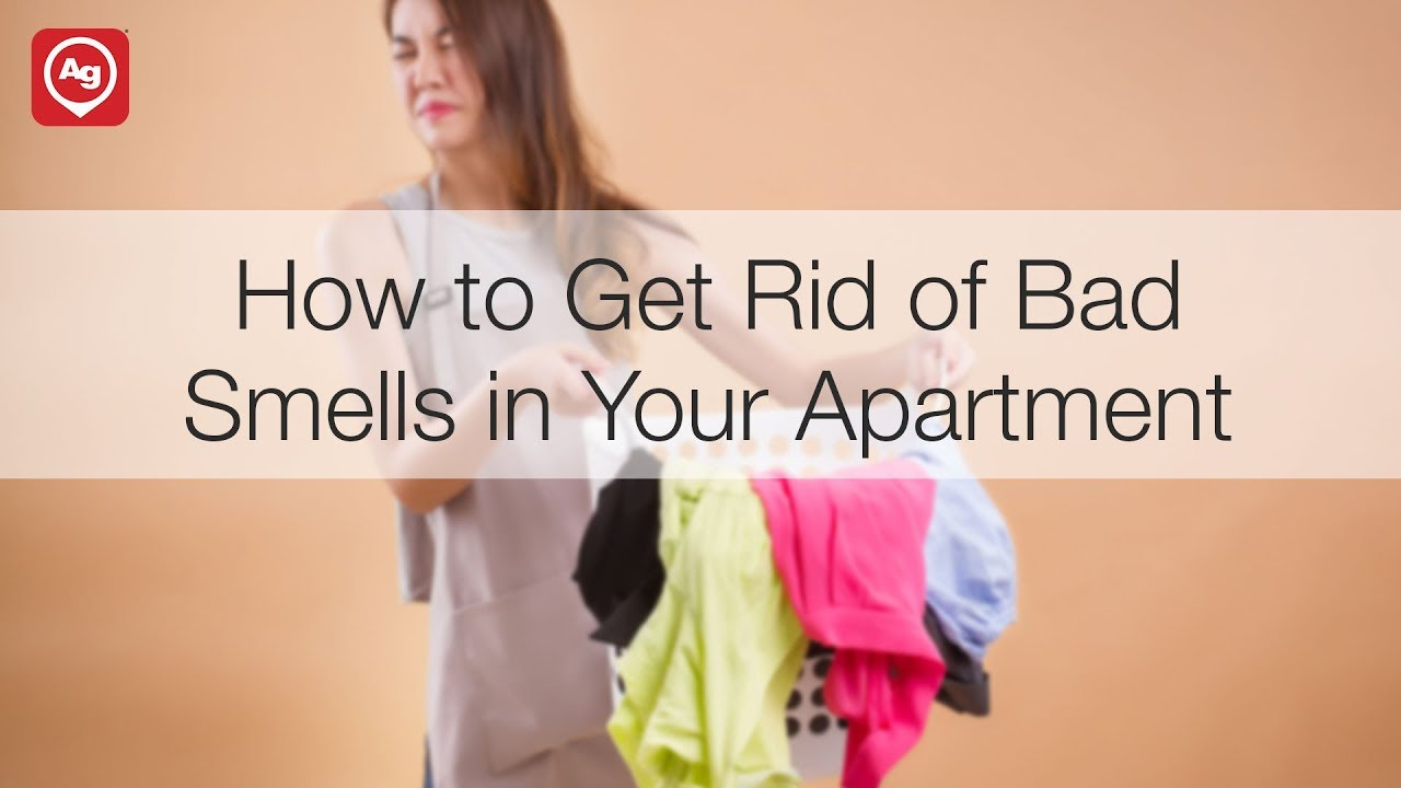 How to Air Out Your Apartment | Apartment Guide