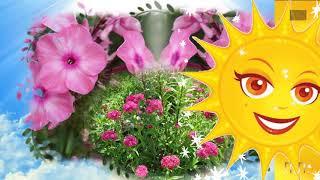 Цветики -  семицветики на моей дачке...