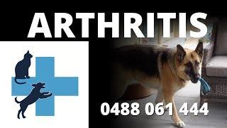 Arthritis In Animals