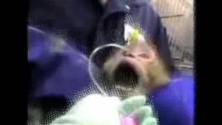 Reator04 - Filhos de vivissectores testados em laboratório (Parte 1 e 2)