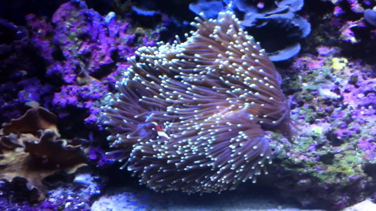 Fish Led Light