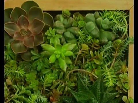 Поделки из растений своими руками