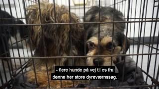 Danmarks andenstørste hundesag