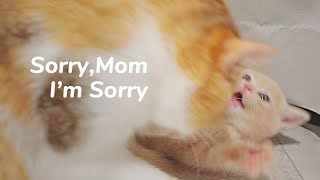 Angry Cat Mom, Beat Kitten with Beats. Super Funny  Day 45 @ Baby Kittens Day 1 to Day 100 Vlogs