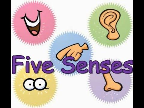 Ђаци Нултог разреда школе у видеу на тему чула човека - Five senses