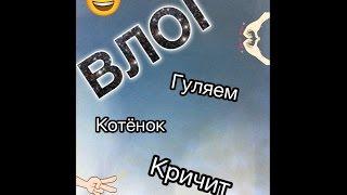 Влог: Котёнок/Гуляем/Кричит