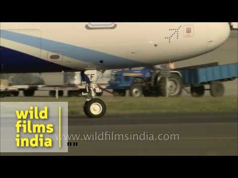Indigo plane takes off while Air India Airbus berths and Jet takes off