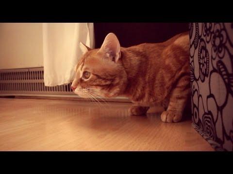 Katze auf Jagd   #PeachesDenkt