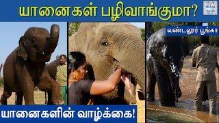 story-of-zoo-elephants-a-day-with-zoo-elephants-life-of-elephants-vandalur-zoo-hindu-tamil