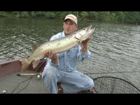 Illinois adventure 1608 fishing for muskie on lake for Fishing lakes in illinois