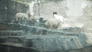 Zoo Praha: Když je v Praze abnormální hic