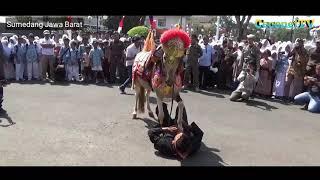 Atraksi seni kuda renggong bertarung manusia vs kuda