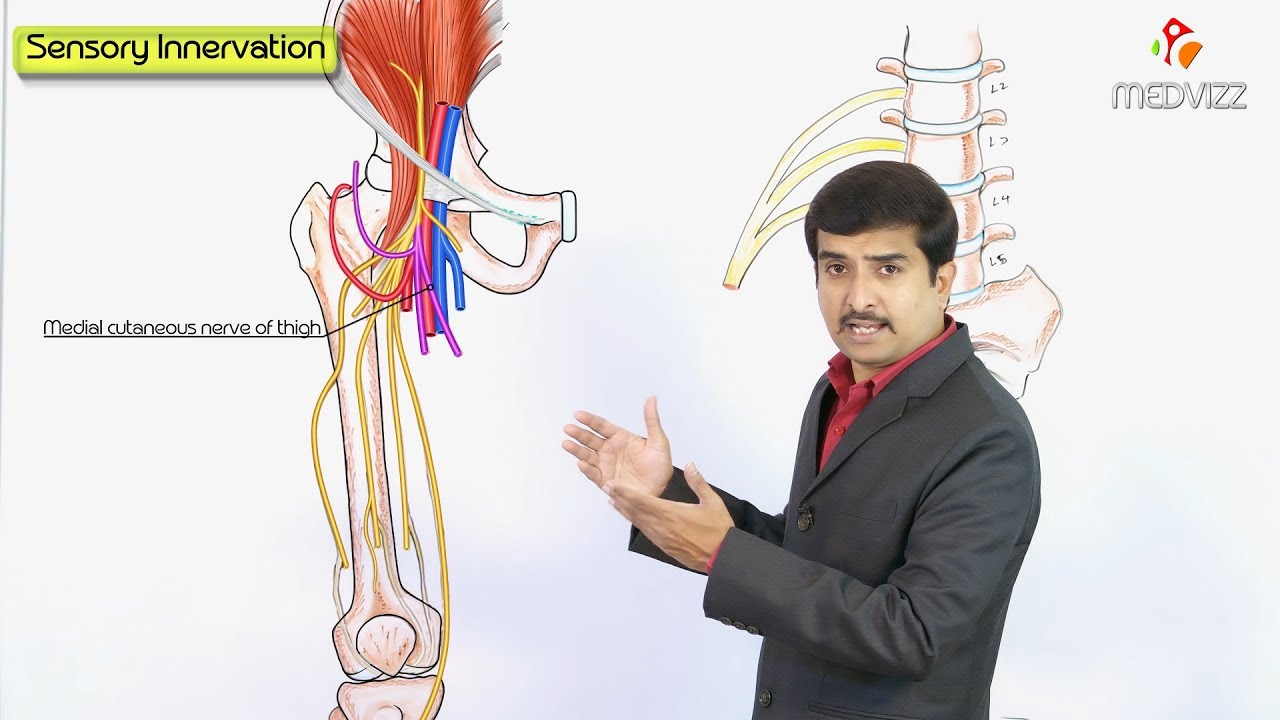Femoral Nerve Anatomy Lecture - USMLE step 1 Gross Anatomy Dr Bhanu ...
