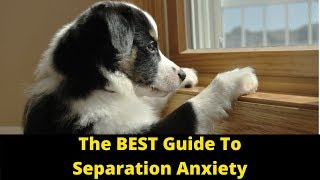 Dog Training: How To Cure Separation Anxiety In Dogs And Puppies