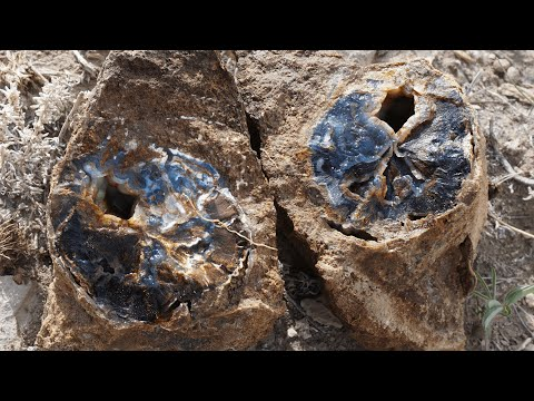 Finding Museum Quality Petrified Wood In The Blue Forest