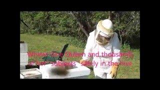Miss Abigail Installs A Beehive