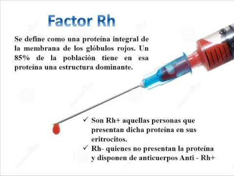 que+es+un+grupo+sanguineo+y+factor+rh