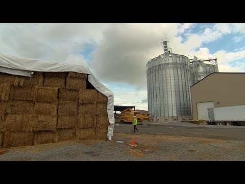 This American Land - 305 - Grass to gas: new frontiers in growing biofuels