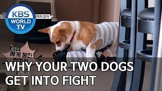Why your two dogs get into fight [Dogs are incredible/ENG/2019.12.04]