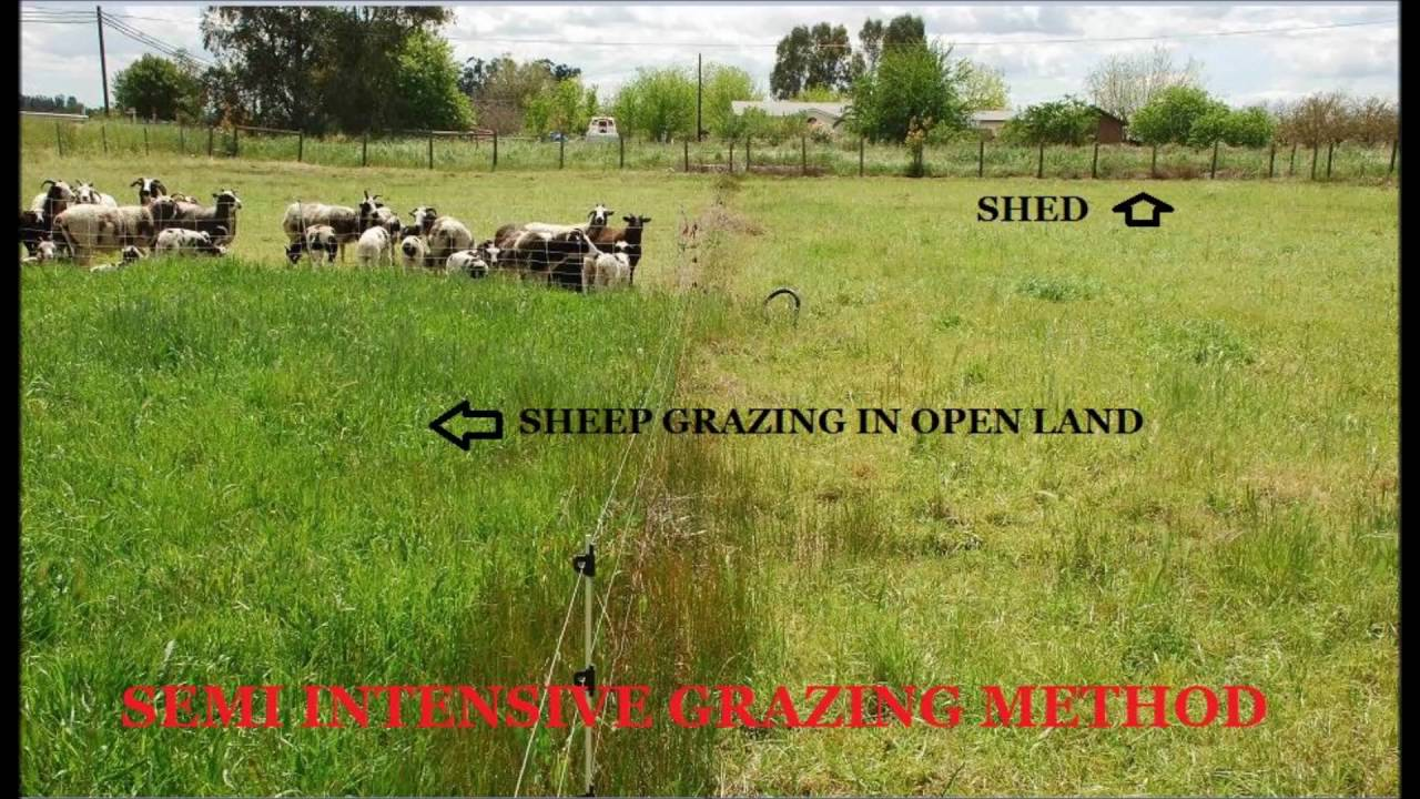 SHEEP AND GOAT FARMING:PART-5:SEMI INTENSIVE GRAZING METHOD