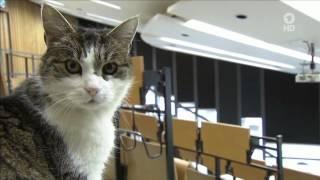 Katzen richtig verstehen (ARD Buffet 07.04.2015)