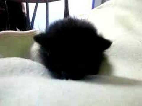 Baby Black Cat - YouTube
