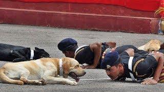 ऐसे होती है आर्मी डॉग्स की ट्रेनिंग   Extremely Disciplined Training Of Military Dogs
