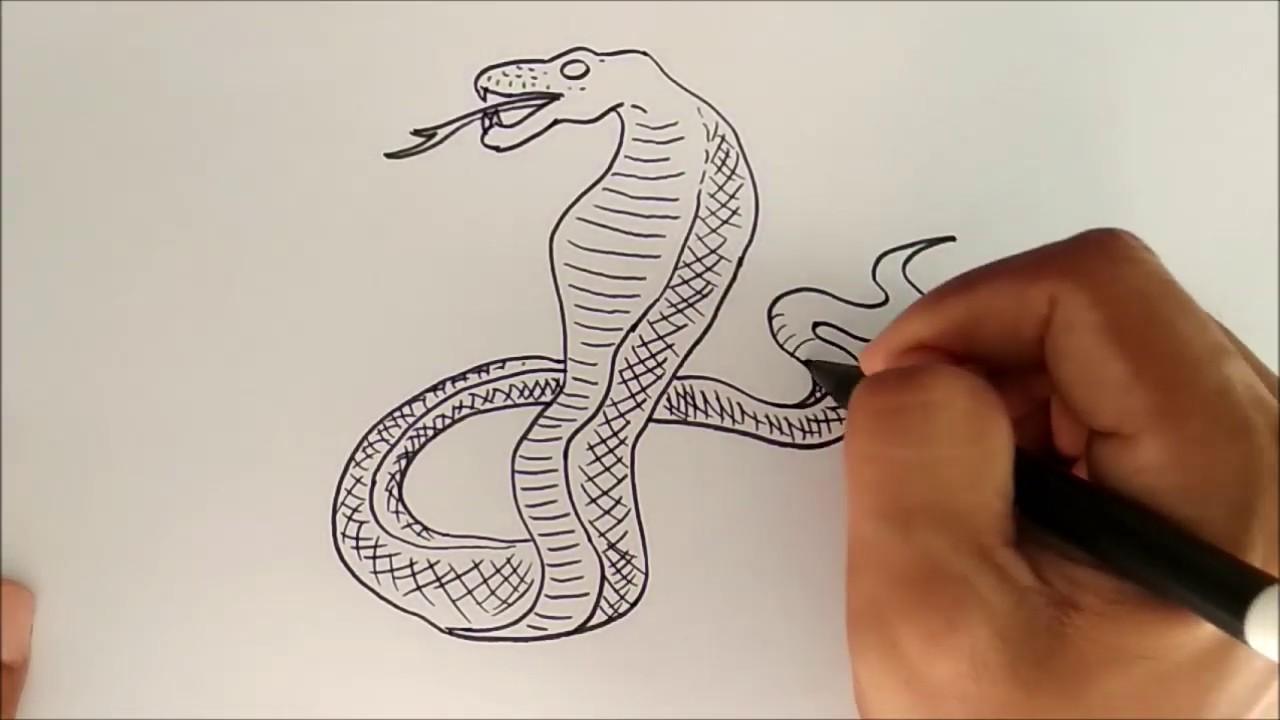 Cara Menggambar Ular Kobra / How to Draw a Cobra Snake ...