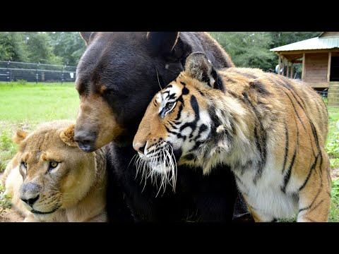 CRAZIEST Friendships Between Different Animal Species!