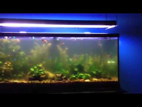 How to clear cloudy aquarium water youtube for Cloudy water in new fish tank