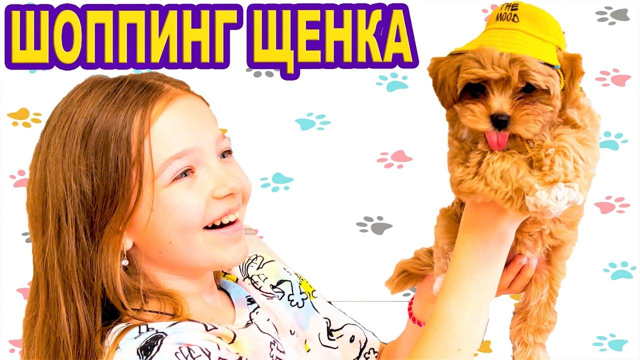 ШОППИНГ для Щенка КЛЕВЕРА 🍀 Покупки для Собаки МАЛЬТИПУ 🐶 ЧТО Ему КУПИЛИ ? Видео Валенсия Лаки🍀