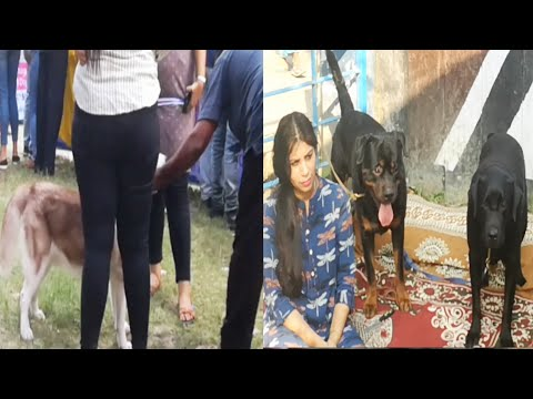 DOG SHOW IN KOLKATA 2019 MADHYAMGRAM CITY | Dog show in India | Dog show 2019