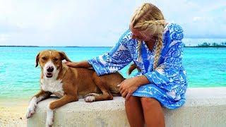 Island Dog Vlog (Super Cooper Sunday #159)