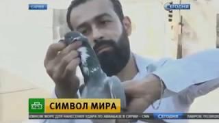 Новости. НТВ - Сирия, Алеппо