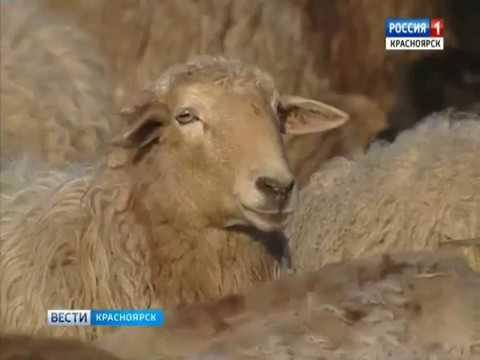 В посёлке Березовский местная предпринимательница возрождает заброшенное хозяйство