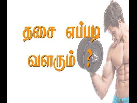 Building Muscle (tamil):  Progressive Overload : அதிகரிக்கும் சுமை