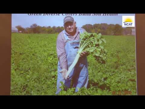 Mimicking Nature: One Farmer's Cover Crop History
