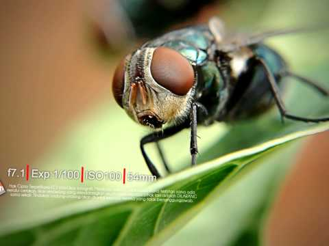 MACRO Travel Video
