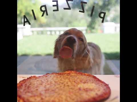 Lori - Dog Really Wants That Pizza!