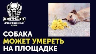 Почему не стоит обучать собаку на площадке | Ваша собака может умереть