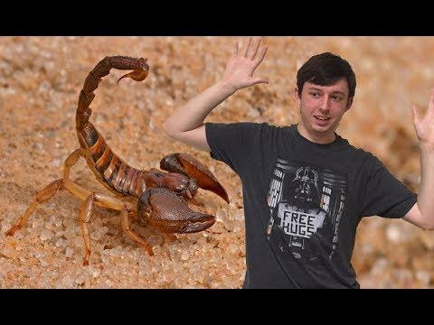 Scorpion Evolution